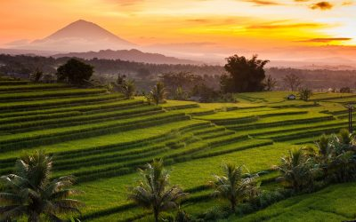 Ubud : comment je suis tombée amoureuse de Bali.