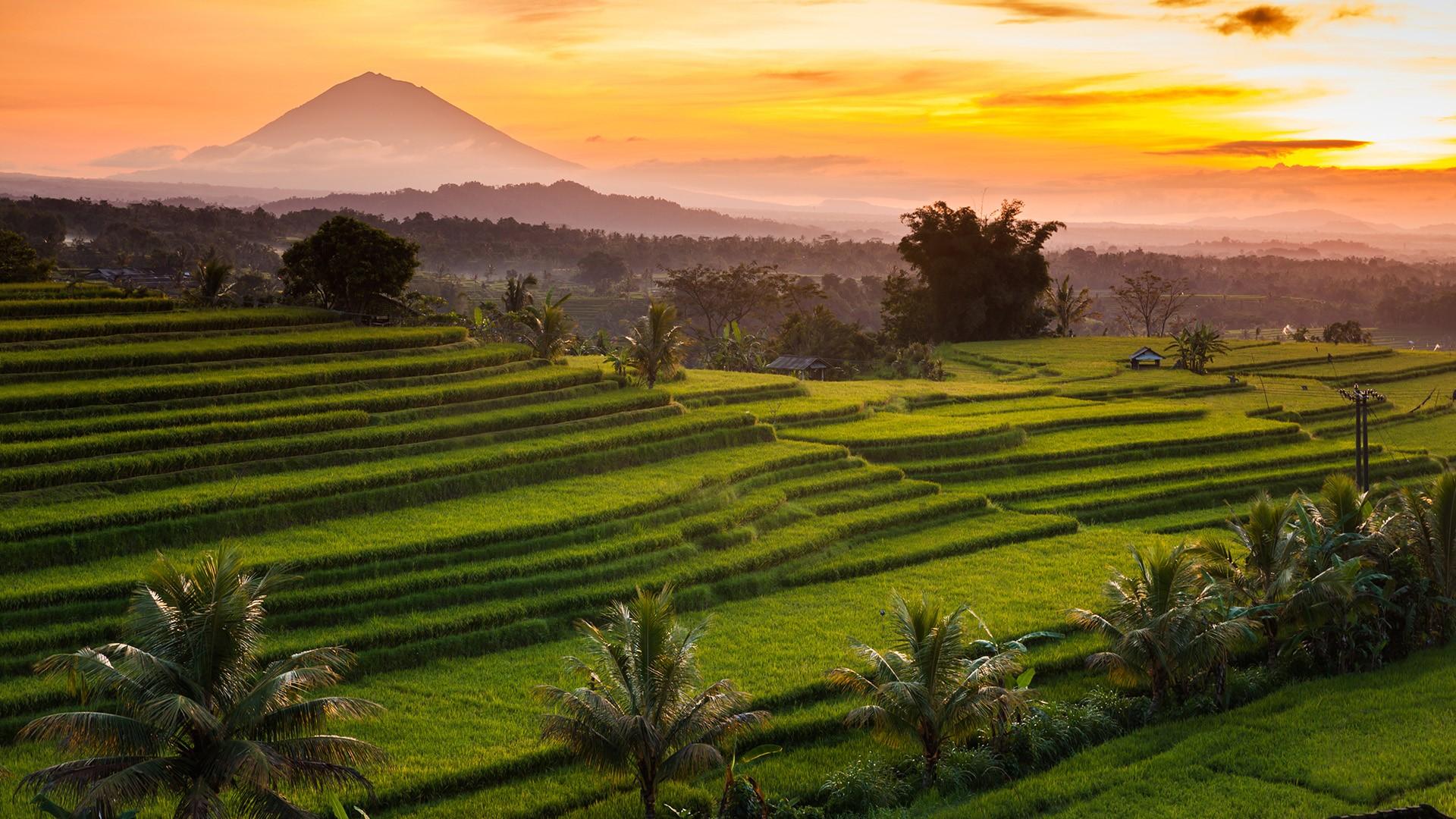 bali jatiluwih rizières luxuriantes au coucher de soleil